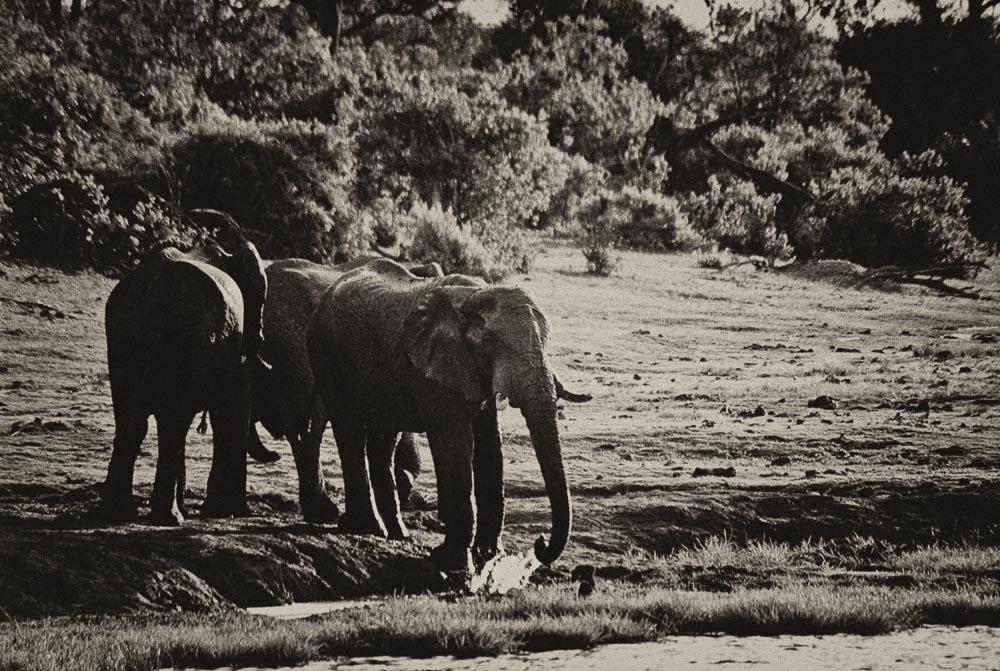 Africa Trip 3766-Edit